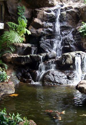 Waikiki_Banyan-13.jpg