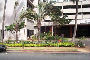Waikiki_Banyan-8.jpg