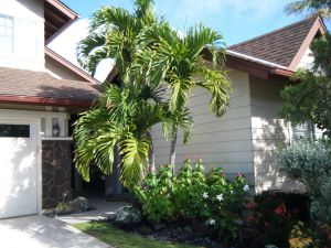 A grouping of Manila palms by the front door